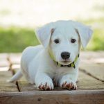 De beste hondenvoer voor uw hond kiezen